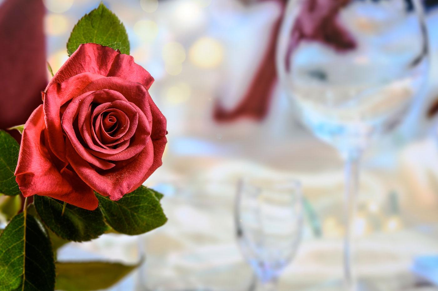 La rosa e il gutturnio